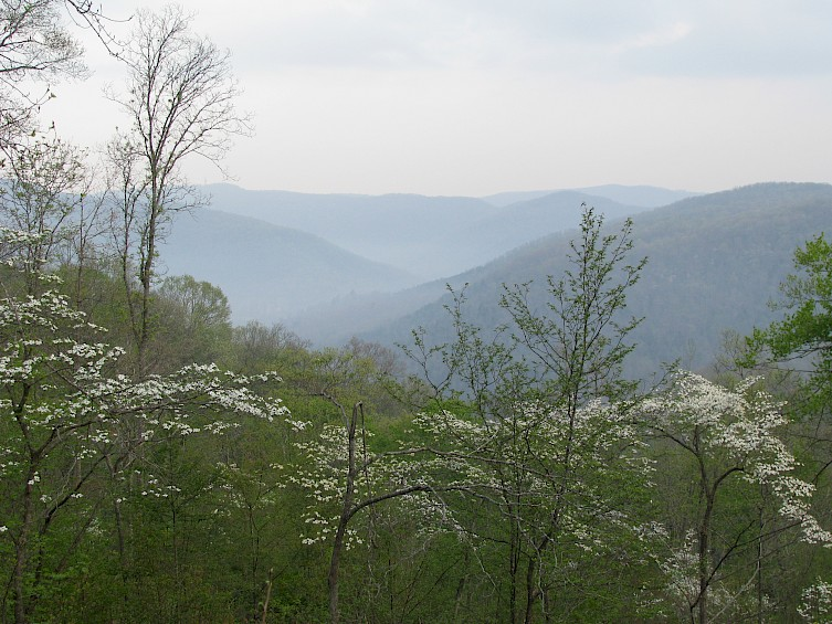 The view of the Dogwoods from Cabin 2